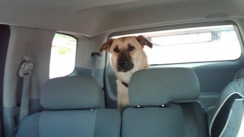 DREPT VED EN FEIL:  Blandingshunden Target hadde heltestatus blant soldatene på en militærbase i Afghanistan, men ble drept ved en feil på et hundepensjonat i Arizona i USA. Foto: Fra  Targets Facebook-side