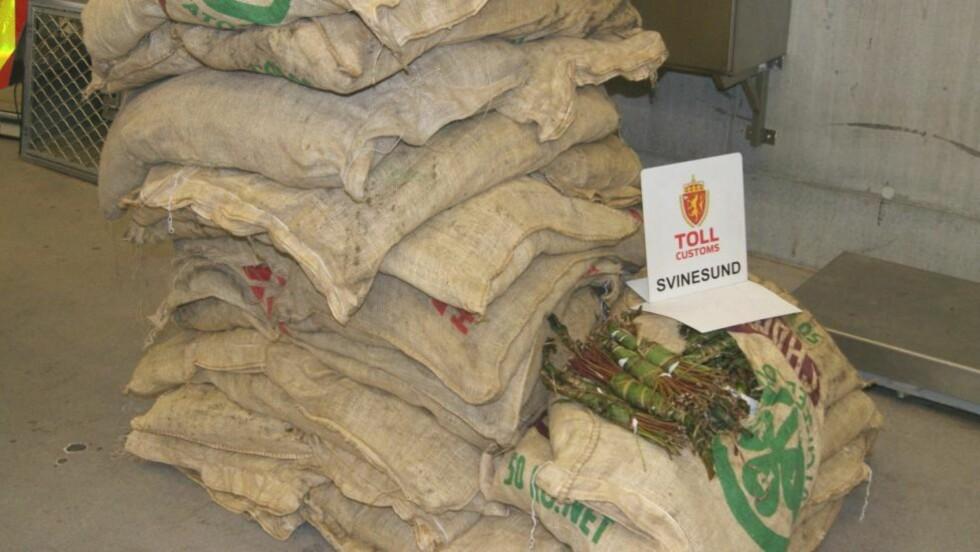 Tollvesenets bilde av beslaget av 318 kilo khat som ble gjort på Svinesund lørdag. Beslaget er det størst tollbeslaget av khat noensinne i Norge. Foto: TOLLVESENET / Scanpix