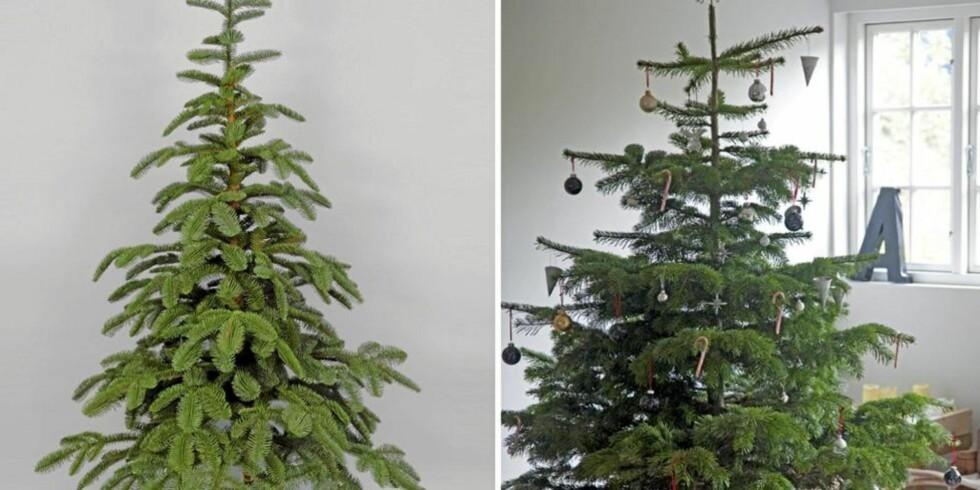 KUNSTIG ELLER NATURLIG: Skal juletreet være kunstig eller naturlig? Valget er ditt. Det kunstige til venstre, forresten. Illustrasjonsfoto: Livinghome.se og www.colourbox.com