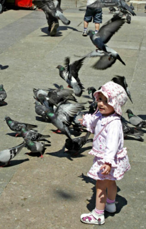 LITT SKUMMELT: Istanbul er også tett befolket av duer, noe denne lille jenta syntes var både spennende og litt skummelt.