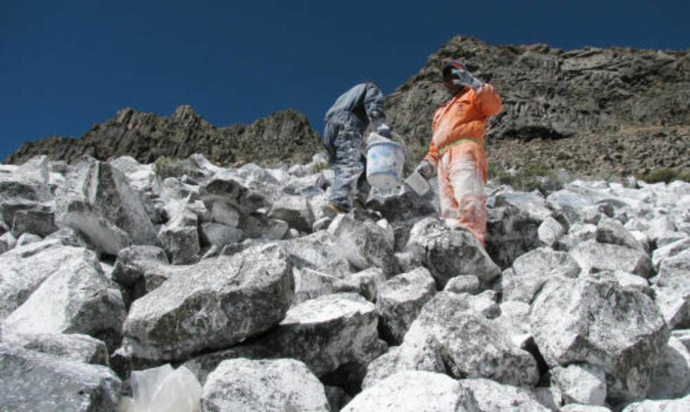 <strong>HARDT ARBEID:</strong> Delen av Andesfjellet i Peru som skal hvitmales ligger 4700 meter og havet. Arbeiderne får hjelp av lamaer til å frakte farge og utstyr. Foto: AFP PHOTO/DAN COLLYNS/SCANPIX