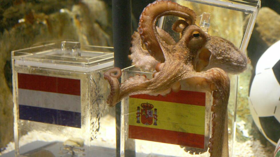 VALGTE SPANIA: Og som historien viser: Blekkspruten Paul, eller Paolo som italienerne kaller ham, fikk rett. Foto: AFP.
