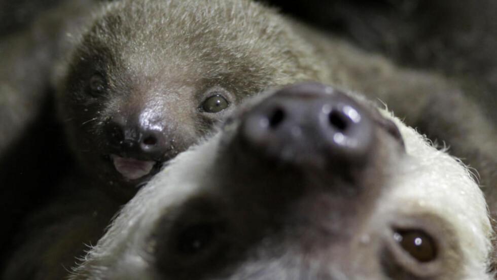 <strong>BABY-DOVENDYR:</strong> Oppå mor Charlotte ved Philadelphia Zoo i Philadelphia, USA. Foto: AP/Matt Rourke