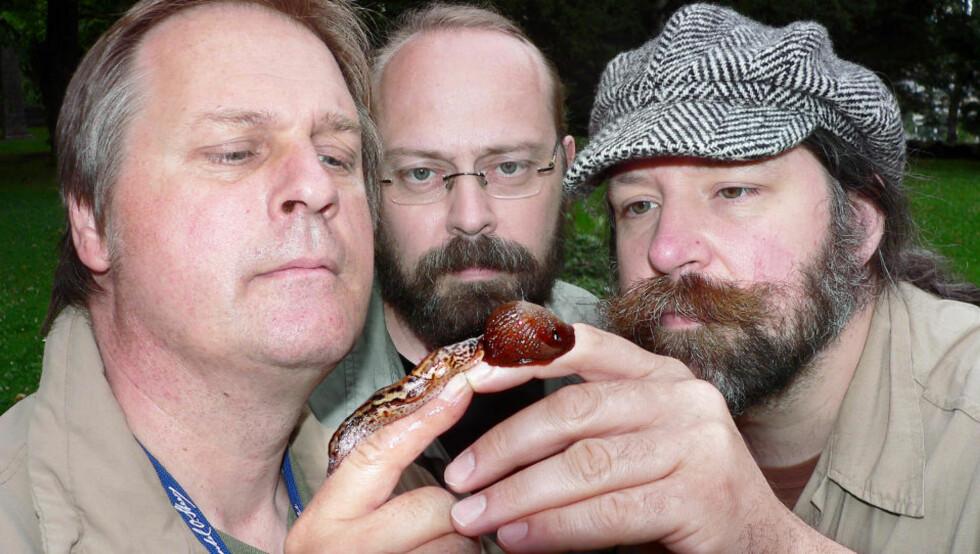 SNEGLEKRIGEN:Bjørn Winter (t.v.), Torfinn Ørmen og Petter Bøckman har studert snegler og funnet ut hvem som er sterkest i sneglekrigen. Foto: Arne Winter