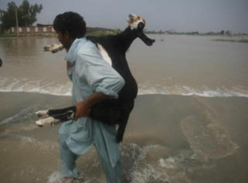 <strong>REDDER GEITA:</strong>  En pakistansk bonde redder med seg en geit i Mehmud Kot, sentralt i Pakistan i dag. Foto: P Photo/K.M.Chaudary