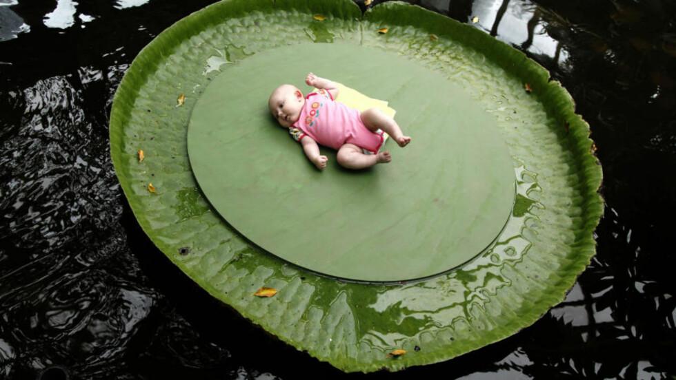 VEKTGRENSE 15 KILO:  Vannliljen heter Victoria Amazonica og modellen Florine de Groot. FOTO: JERRY LAMPEN, REUTERS/SCANPIX.