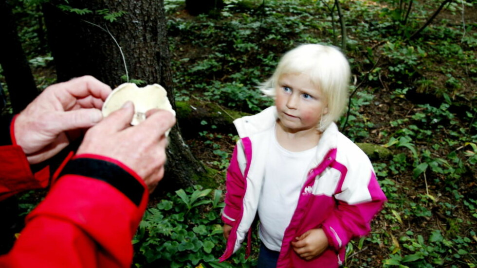 LÆRER OM SOPP: Anniken Kolflaath Bjørgo (4) er på sopptur i regi av Oslo sopp- og nyttevekstforbund med far Leif (32) for å lære om sopp. Foto:Jacques Hvistendahl (Dagbladet)