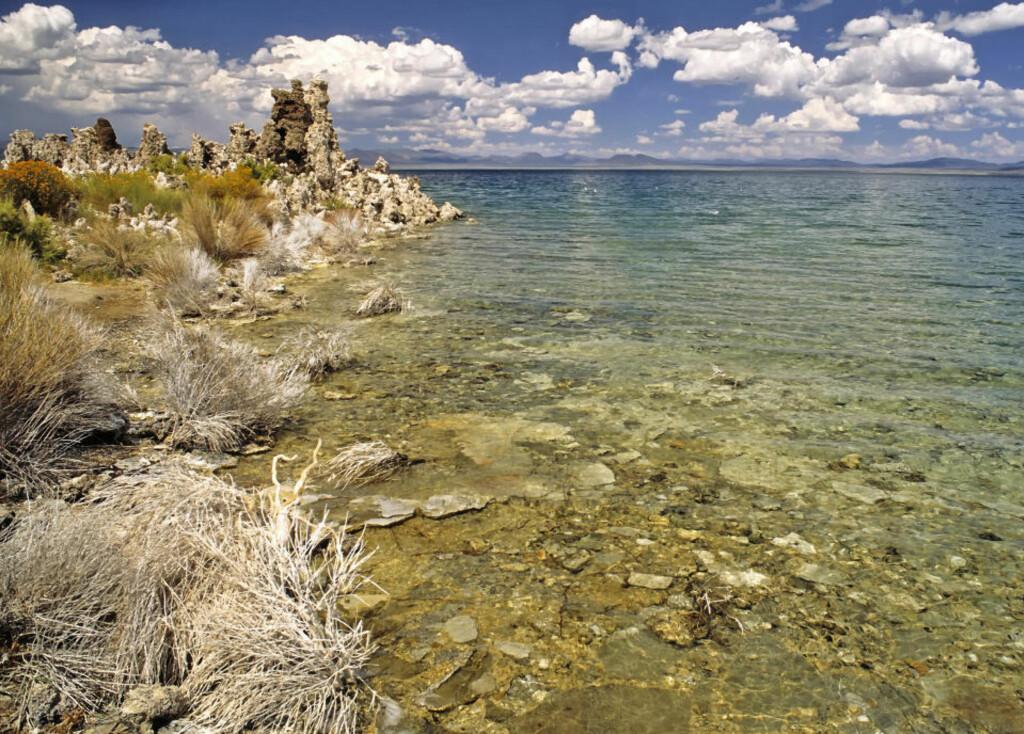 HER LETER DE ETTER UKJENTE FORMER FOR LIV: Mono Lake i California har noen merkelige mikrober som gafler i seg arsenikk uten problemer. Kan dette være en livsform med et annet opphav enn vårt? Foto: WIKIMEDIA