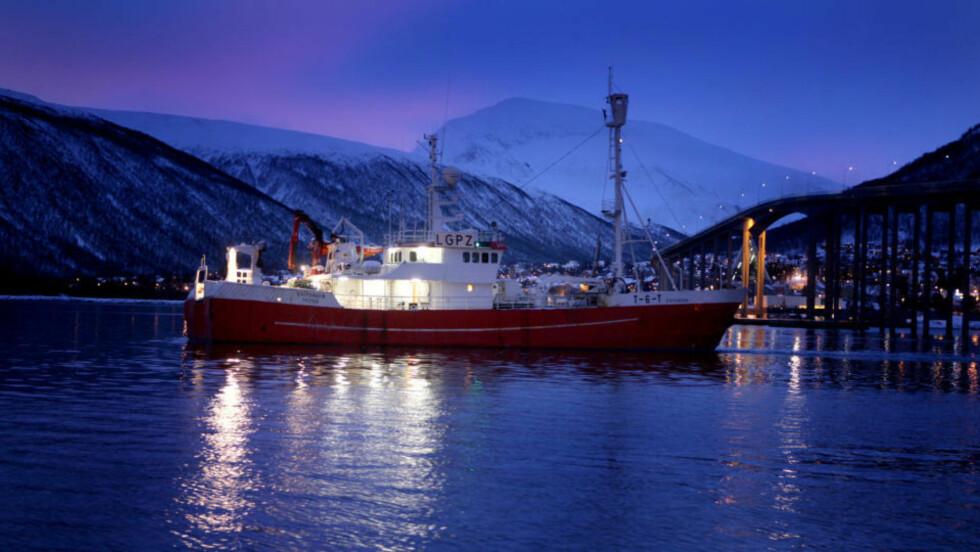 FÅR BOT:  Skipperen om bord på selfangstskuta M/S Kvitungen er ilagt bot for krøking av levende sel. Foto: Yngve Olsen Sæbbe/Nordlys