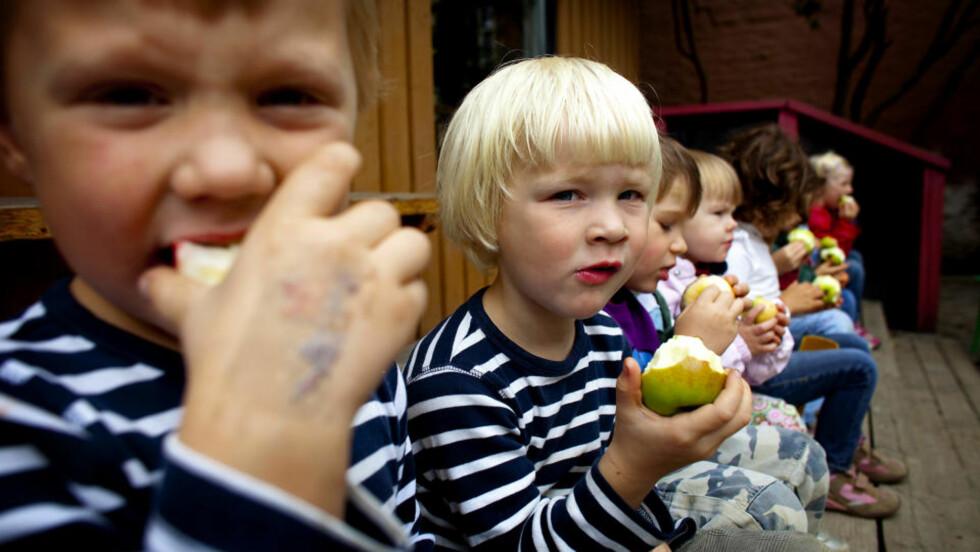 EPLEFEST: Barna (f.v.) Jørgen Jordfall (5), Hauk Vargum Henriksen (4), Simon Arnesen (4) og Anna Storstein (2) elsker epler. Og de klarer å sitte stille mens de spiser dem. Foto: Bjørn Langsem