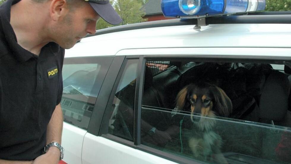 MISTENKT: Politiet understreker overfor Dagbladet at hunden ble hentet, ikke pågrepet. Hunden har status som mistenkt, men saken regnes som oppklart. Foto: NAMDALSAVISA