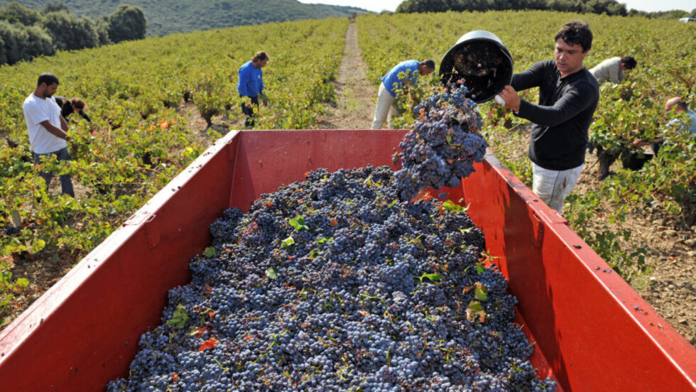 ENORM REGION: Franske Languedoc-Roussillion er verdens største vinregion. Den dekker middelhavskysten og fjellandskapet fra Pyreneene ved spanskegrensa i vest til Rhônedalen og Provence i sør. Foto: AFP/PASCAL GUYOT