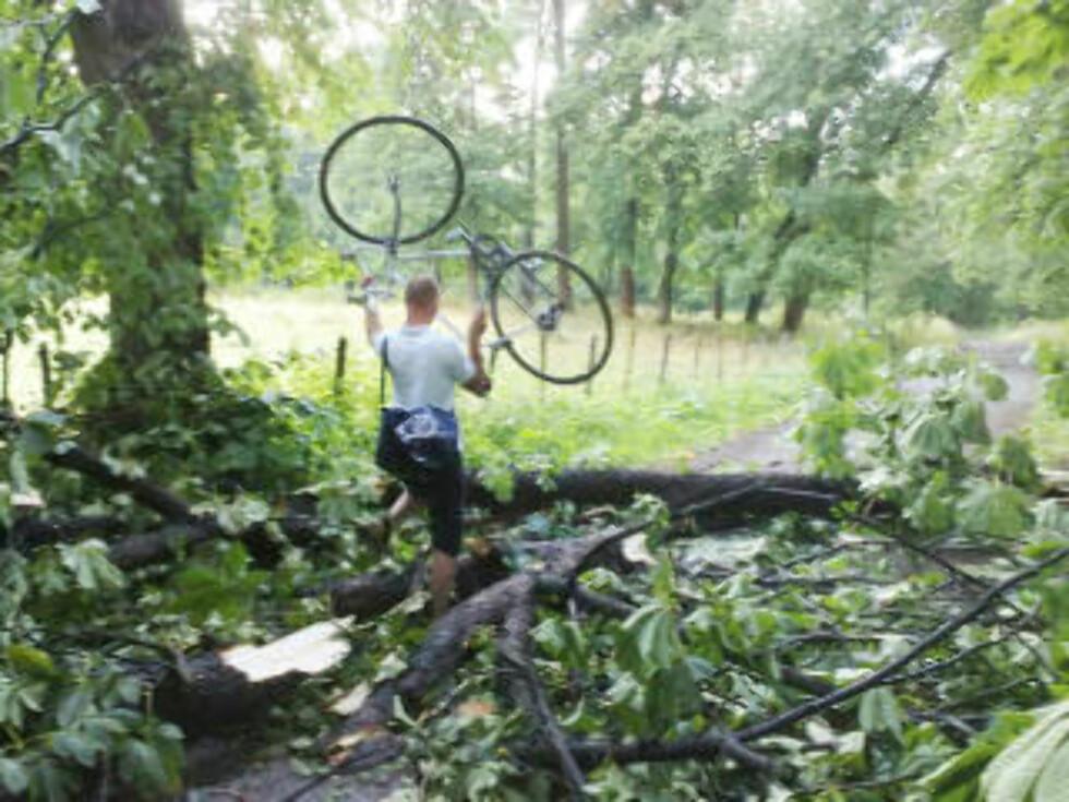 TRE I VEIEN: Trær ble delt i to da lynet slo ned. Foto: BJØRN BREKKE