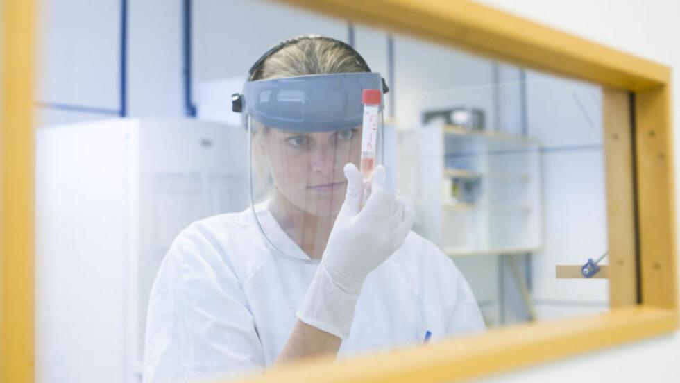 TESTER: Bioingeniør Julie Mari Frigaard ved Mikrobiologisk laboratorium ved Ullevål Sykehus i Oslo får inn prøver og tester etter virus A (H1N1), bedre kjent som svineinfluensa. Til tross for at antall nordmenn som kommer hjem fra utenlandsreiser smittes av influensaen øker, trappes det nå ned på laboratorietesting av mistenkte tilfeller. Foto: Berit Roald / SCANPIX