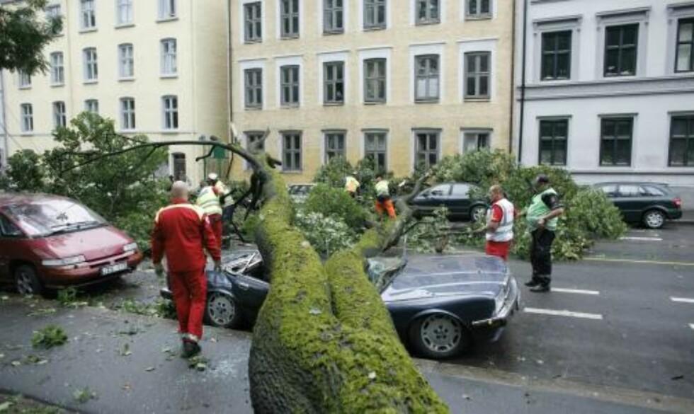 TOM BIL: Ingen befant seg inne i bilen da treet falt. Foto: Torbjørn Grønning/Dagbladet