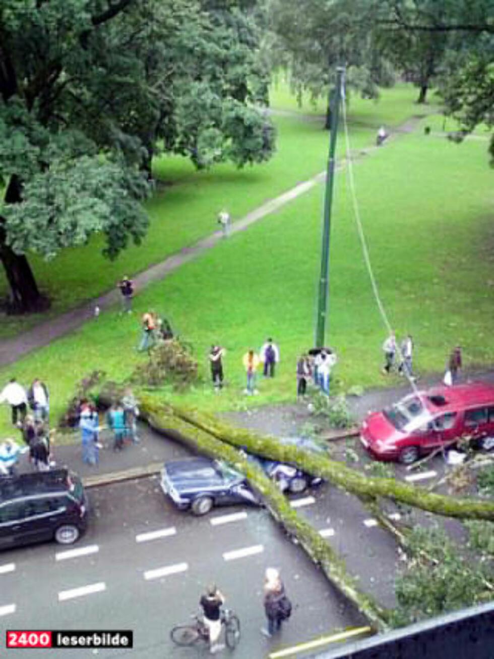 En bil ble  knust av et tre som veltet i Toftes gate i Oslo. Flere biler på andre siden av gaten ble også rammet. Foto: Pål Brenn