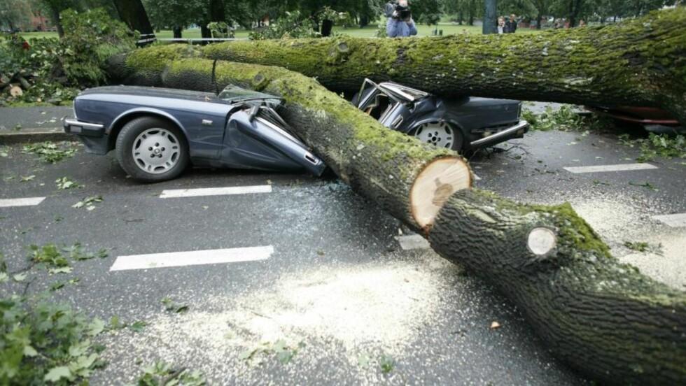 - TRAGISK: For andre gang på under to måneder blir denne Jaguaren truffet av et fallende tre. - Bilen er et klenodie... Det er litt tragisk for å si det mildt. Den ser litt lavere ut enn før... Faen, jeg blir bare så irritert, sier eier av bilen, Kjetil Pettersen, til Dagbladet. Foto: Torbjørn Grønning/Dagbladet
