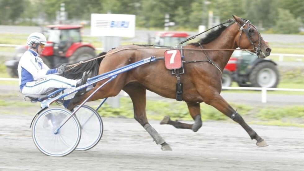 STERK OG GALOPPLYSTEN: Strong Forte vinner om han opøptrer fornuftig på lørdag. Foto: HESTEGUIDEN.COM.