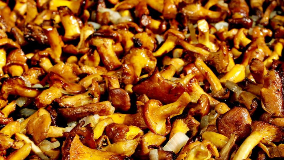 KANTARELLPANNE:  Fantastisk godt og veldig enkelt! Nytes som en egen rett sammen med ristet brød, eller som tilbehør til både kjøtt og fisk  Du trenger:  Ca. 1/2 kg kantareller pr. person  Noen sjalottløk  Rapsolje  Godt smør  Salt og pepper  Slik gjør du:  1. Rensk soppen fri for grus og kvist. Ikke skyll den. Skjær løken i fine skiver 2. Ta litt rapsolje i glovarm panne, hell soppen i panna, og la den ligge lenge sammen med sjalottløken. Ikke rør i panna, for da begynner soppen å koke istedenfor å steke   3. Når soppen har fått satt seg skikkelig, tar du oppi litt smør. Når det er smeltet, kan du røre i sopp-panna, og ta i salt og pepper til slutt. Vil du ha en kremet variant av kantarellpanna, tar du i fløte eller rømme før servering.