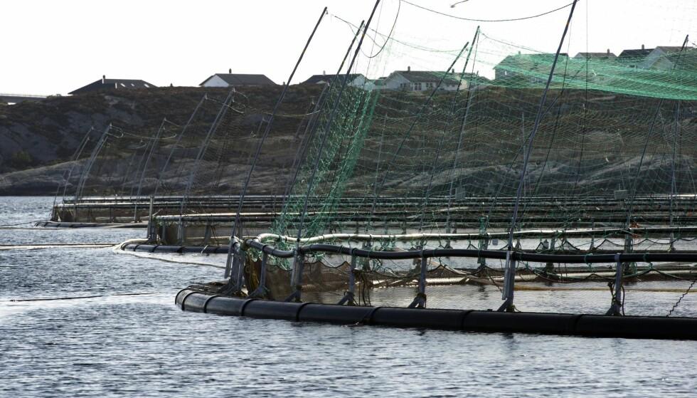 UAVHENGIG: – Jeg har ingen interesse av å styre forskningsresultater. Dersom forskningen ikke er uavhengig, er den heller ikke noe verd, sier fiskeriminister Per Sandberg etter «Brennpunkt»-programmet om oppdrettsnæringen. Foto: Marit Hommedal / NTB Scanpix
