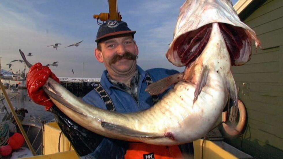 <strong>IKKE MUTERT:</strong>  Denne sværingen av en torsk er en skrei, og tåler ikke like varmt vann som torsken i Nordsjøen.  Det er Arne Helge Kristoffersen som dro opp denne på Røstbanken, ytterst i Lofoten. Arkivfoto: Erik Veigård / SCANPIX