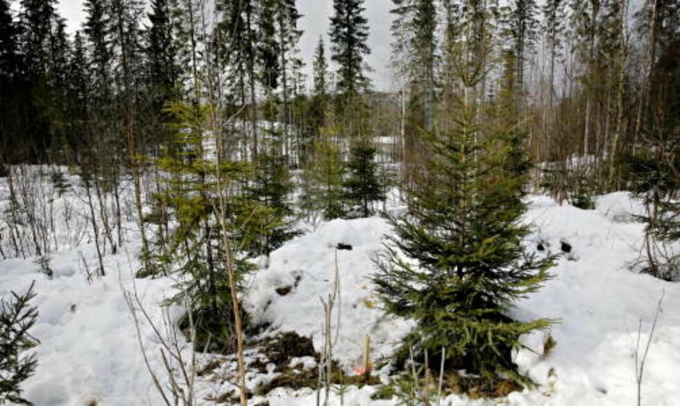 FUNNSTEDET: Liket av den drepte legen ble funnet i Sørkedalen i Oslo 17. mars 2007. Foto: Kristian Ridder-Nielsen