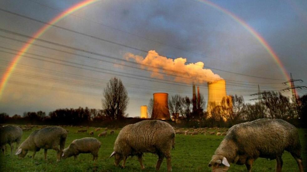 KULLKRAFT I REGNBUESKINN: Ett av Tysklands mange kullkraftverk, i nærheten av Frankfurt. Foto: REUTERS/ SCANPIX