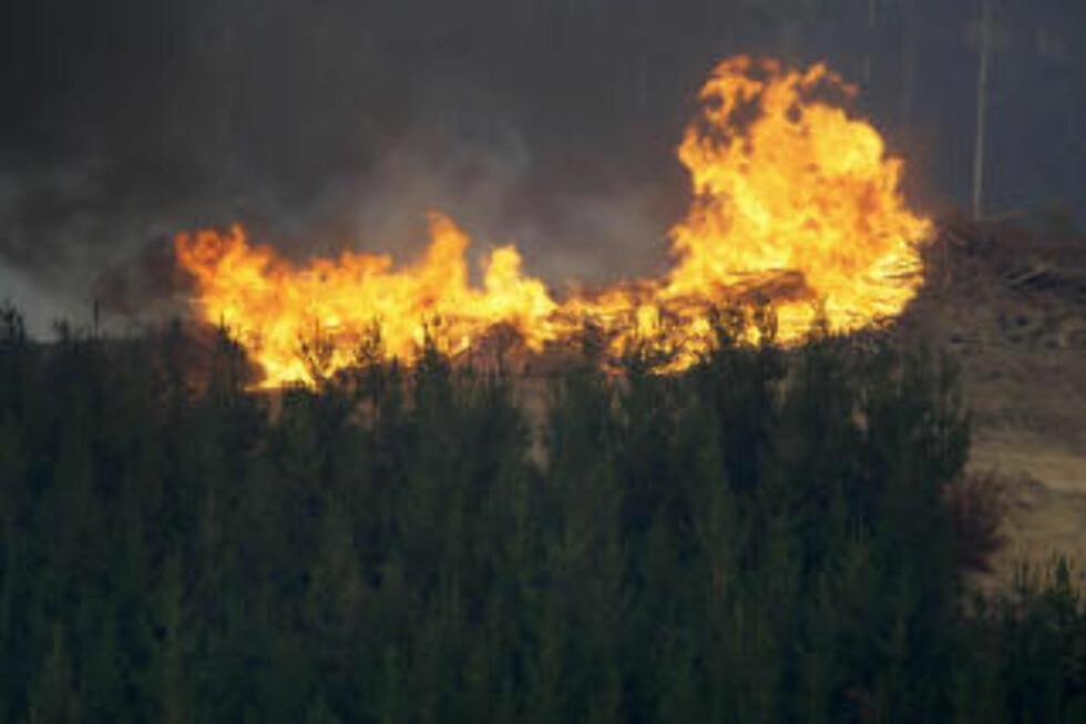 - MASSEMORD: Mener statsminister i Australia Kevin Rudd. Mandag brenner fremdeles 31 branner. Foto: AP/SCANPIX