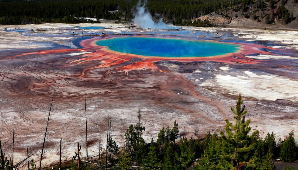 NASJONALPARK: Yellowstone nasjonalpark er en nasjonalpark og et verdensarvområde i delstatene Idaho, Montana og Wyoming i USA. Yellowstone ble etablert 1. mars 1872 og er med det verdens eldste nasjonalpark. Den dekker 8983 km², for det meste i Wyomings nordvestlige hjørne. Foto: Jim Urquhart/Reuters/Scapix