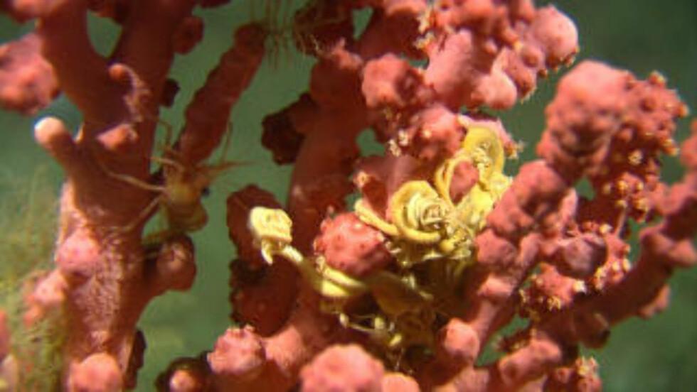 <strong>RIKT OG UNIKT:</strong> Et sjøtre og medusahode. Foto: Havforskningsinstituttet