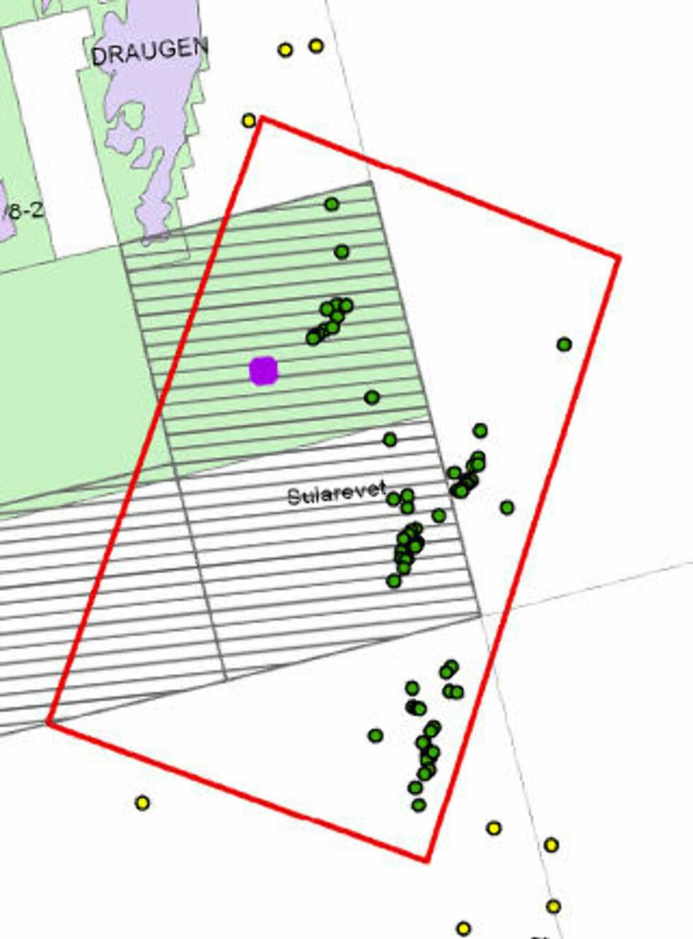 <strong>HER LIGGER KORALLENE:</strong> Sula korallvernområde (rød ramme) slik det er nedfelt i Korallforskriften fra 1999. De grønne punktene er de hittil registrerte store korallrevene. Det lilla området er foreslått for leteboring. KART: Havforskningsinstituttet