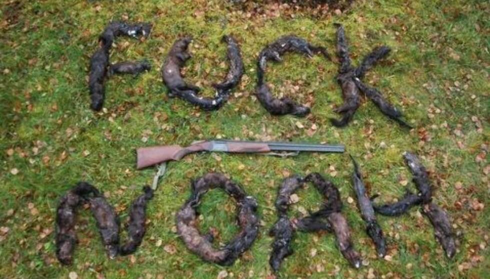 """VEKKER REAKSJONER: Dette bildet, som viser døde mink og påskriften """"Fuck NOAH"""", provoserer NOAH og internettbrukere. Dagbladet har fått tilllatelse til å bruke bildet via en kjenning av fotografen. Foto: Privat."""