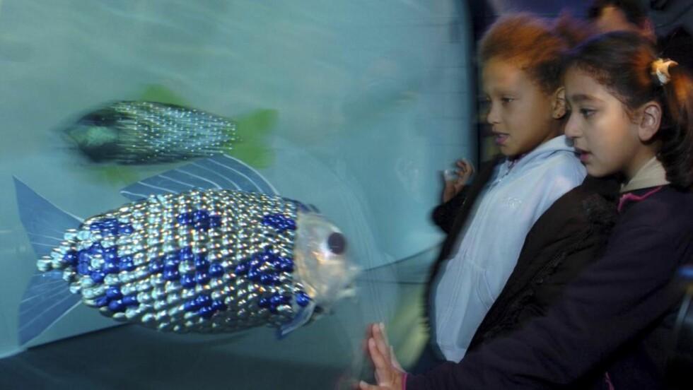 MILJØPOLITI: Barn studerer robotfisk i akvariet i London. Spanske havnemyndigheter skal nå få hjelp til å bekjeme miljøutslipp i en form av EU-finansierte fisker av denne typen. De karpeformede robotene koster 20.000 pund eller nesten 185.00 kroner hver.Foto: SCANPIX/REUTERS/Jonas Borg/UPPA/Photoshot/Handout