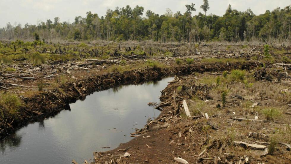 FORSVINNER: Regnskogen i Kotawaringin Timur-distriktet i Indonesia er blant de mange som ødelegges over hele verden. Foto: Scanpix/REUTERS