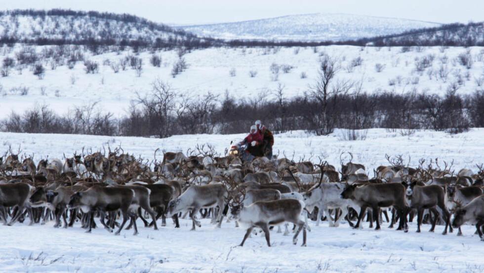 FINT BESØK: Kronprinsparet var i vinter på offisielt besøk i Finnmark, her er de på snøscooter blant en reinflokk på vidda i Kautokeino. Foto: Lise Åserud / SCANPIX