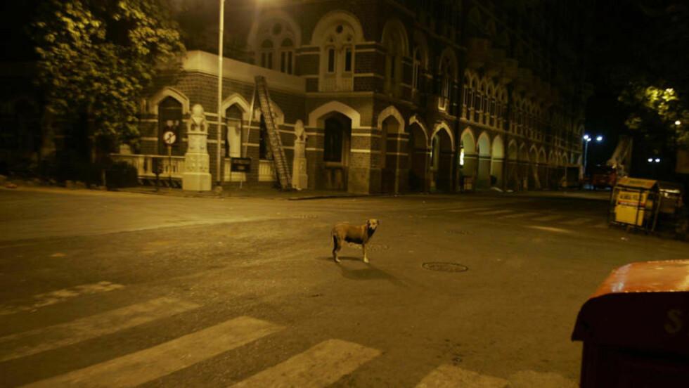 """SOLDATER GJENNOMSØKER HOTELLET: Taj Palace Hotel, et av hotellene i Mumbai som ble angrepet onsdag, avbildet torsdag kveld. Her skal personene bak terrorangrepet ha opprettet """"kontrollrom"""". Foto: AP/SCANPIX"""