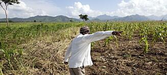 Småbønder produserer ikke 70 prosent av maten i verden