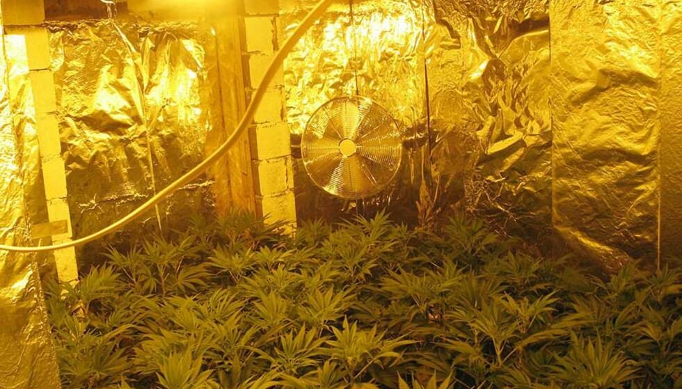 HELPROFT: Cannabis-anlegget som politiet fant på Jessheim, var utstyrt med eget lys-, vanning, elektrisitet og gjødslingsanlegg. Foto: POLITIET