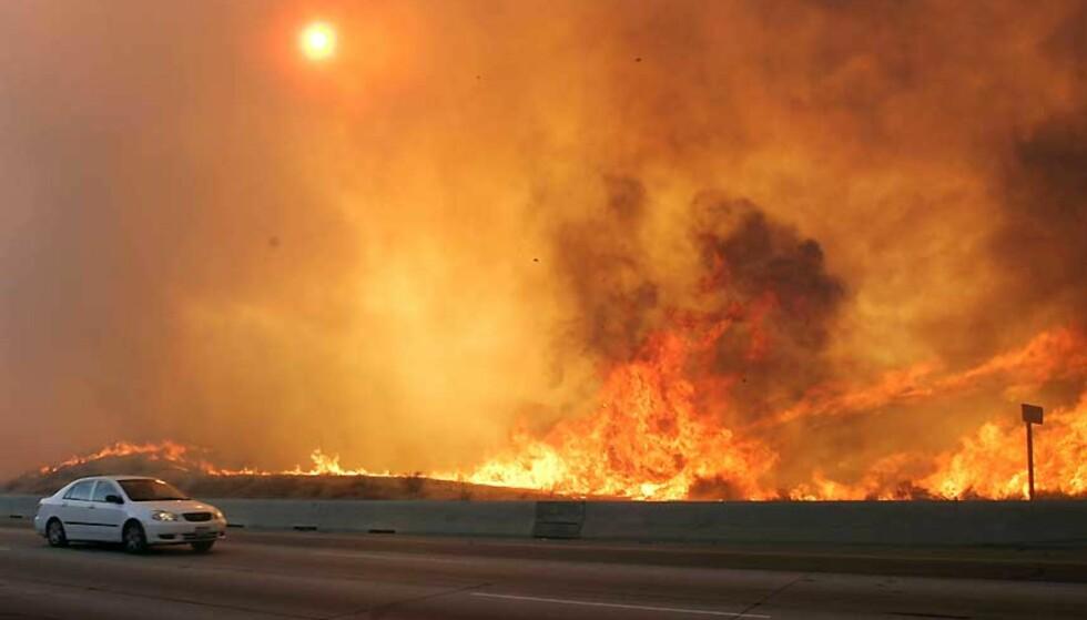 BRENNER VED MOTORVEIEN: En bilfører kjører forbi en brann som beveger seg raskt bortover motorveien Freeway 14 nær Santa Clarita i California lørdag. Foto: DAN STEINBERG/AP/SCANPIX.
