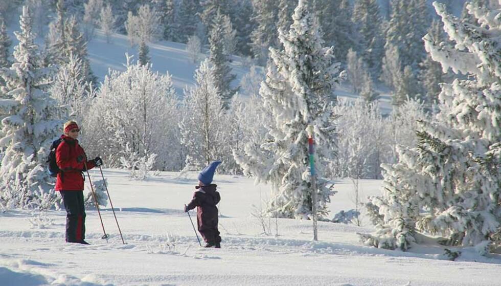 IKKE SÅNN: Det urnorske bildet av vinterlandet Norge står for fall. Klimaendringene vil rasere den norske vinteren. Foto: ODD ROAR LANGE/DAGBLADET