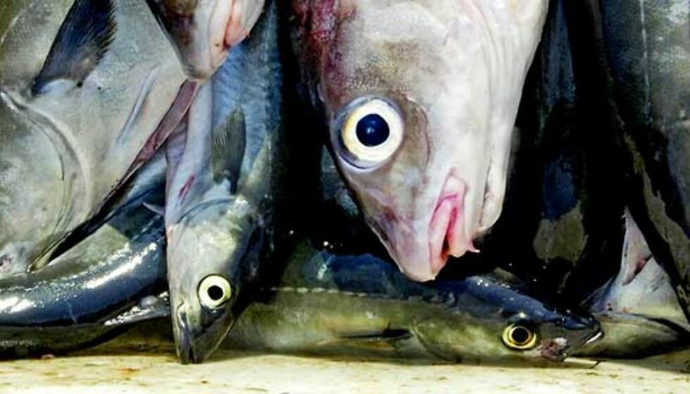 Spiste ikke fisk på 4000 år