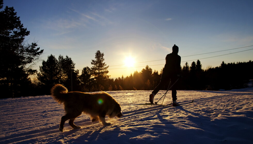 BLIR IKKE SNØ: Det meste av Norge får trolig en brun jul, skal en tro Meteorologisk Institutt. Foto: Kyrre Lien / Scanpix .