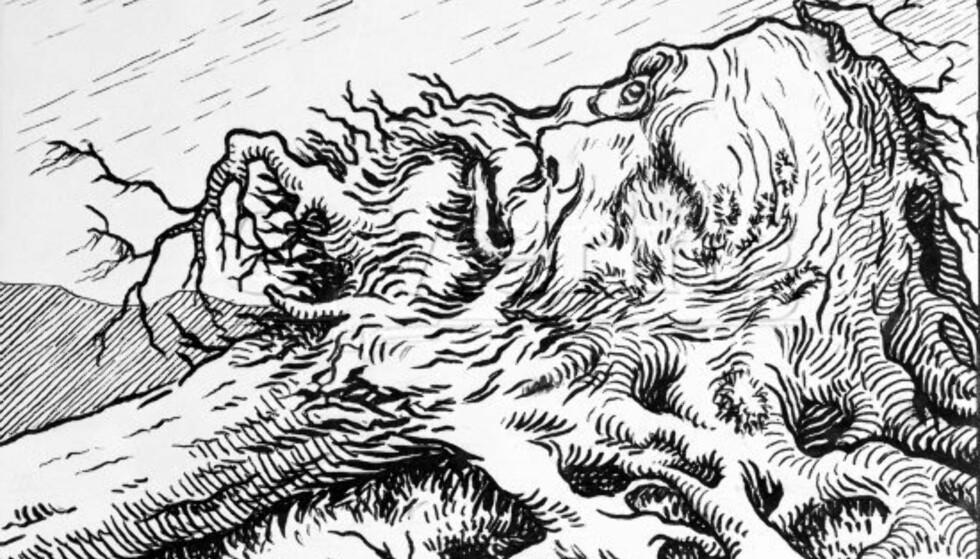 ROTNORSK? Ikke nødvendigvis. Theodor Kittelsen tegnet sin berømte «Vinjefuruen» i 1912.