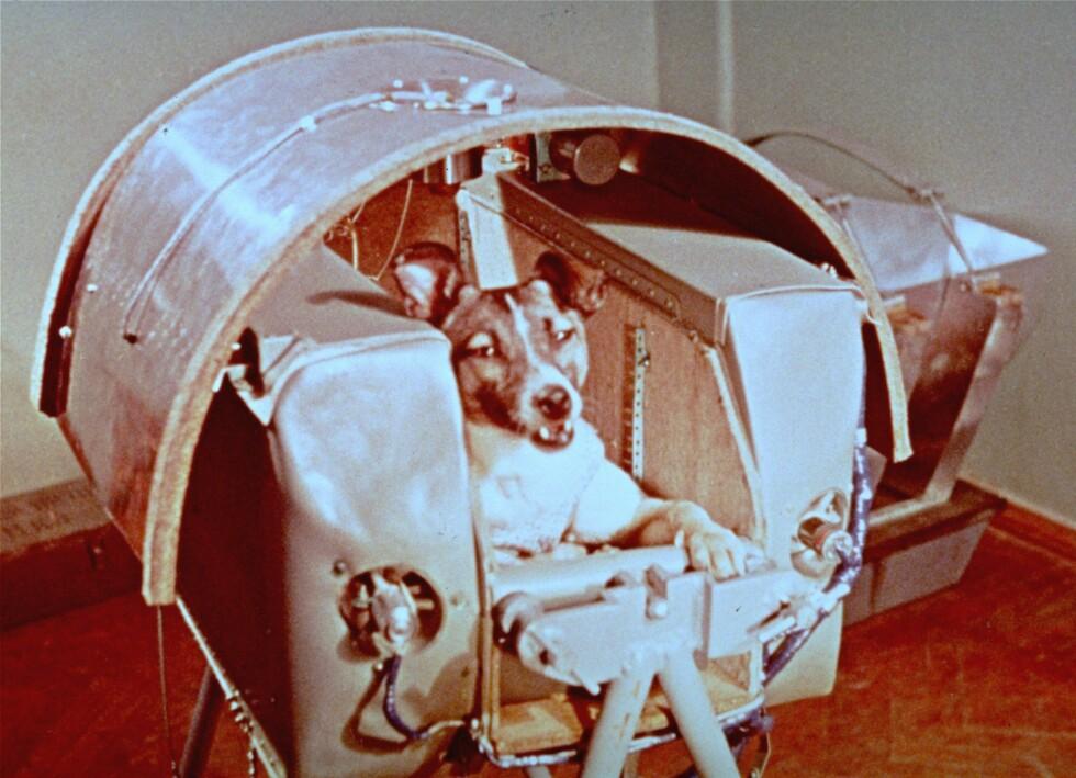 HUND I ROMMET: I november er det 60 år siden Laika ble skutt opp i Sputnik 2.  Foto: AP/NTB Scanpix