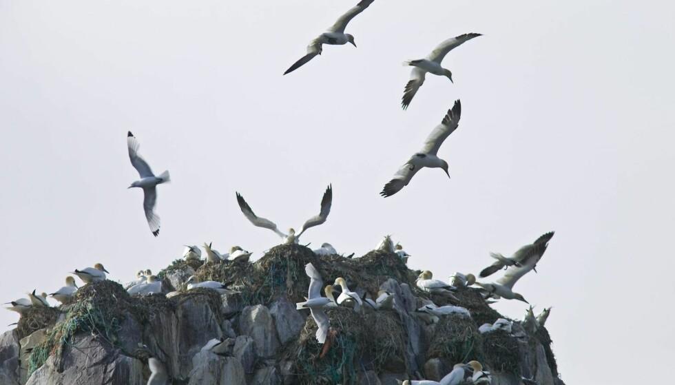 TREND: Fugleturisme i Øst-Finnmark er et norsk bidrag til den internasjonale trenden Wildlife watching. Her fra Syltefjordsstauran, et fjell ved Syltefjord i Båtsfjord kommune i Finnmark. Foto: Sven Halling / NTB Scanpix