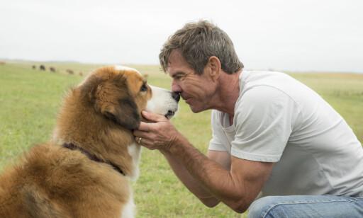 NÆRKONTAKT: Dennis Quaid har en av hovedrollene i «A Dog's Purpose», mens Josh Gad gir stemme til hunden. Gad har publisert en melding på Twitter der han skriver at han har bedt produksjonsselskapet om en forklaring for de forstyrrende videoklippene fra innspillinga. Foto: Joe Lederer / Universal Pictures / NTB Scanpix