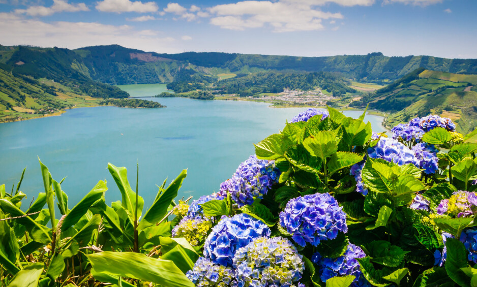 URØRT NATUR: På Azorene finner du skoger av hortensia. Foto: Shutterstock / NTB Scanpix