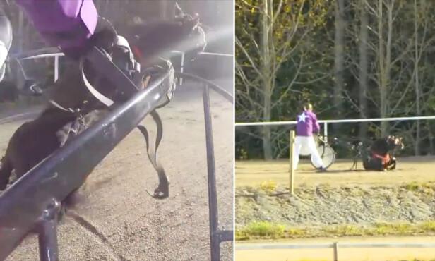 <strong>MISTET BALANSEN:</strong> Travhesten Zorro mistet balansen da Runar Søgaard kjørte travhesten i en episode av Stjärnkusken. FOTO: TV4