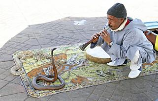 SLANGETEMMING: Et dagligdags syn i Marrakech. Foto: Runar Larrsen / Magasinet Reiselyst