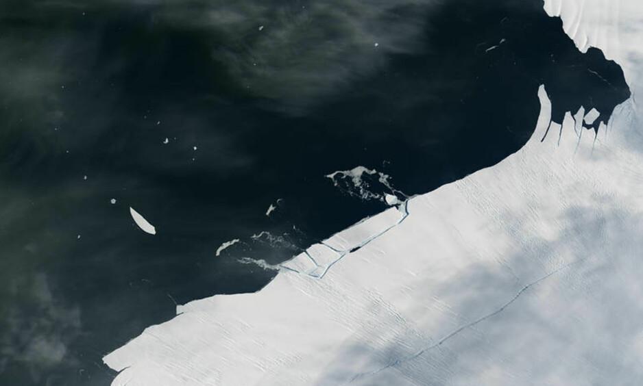 KALVING: På satellittbildet ses tydelig det nye isfjellet, som brekker av fra Pine Island-breen. Fjellet måler 1-2 km på tvers. Foto: Landsat 8 / Nasa